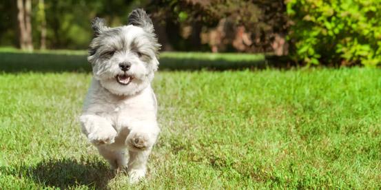 cachorro,correndo-parque