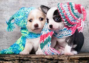 Cuidados com o cão no inverno