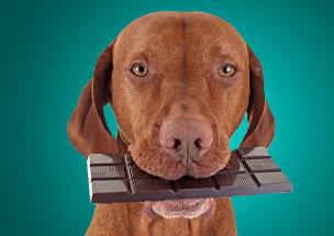 Alimentos perigosos para seu cão