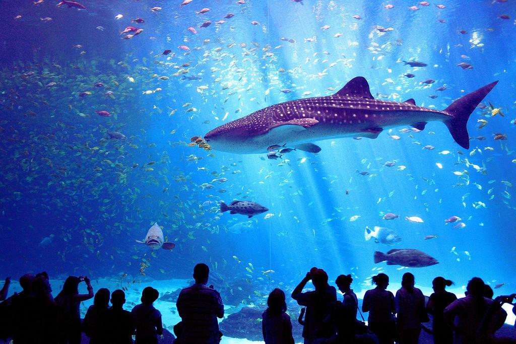 maior aeroporto do mundo - O Georgia Aquarium é uma boa opção para os visitantes